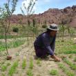 Proyecto de implementación de huertos orgánicos con participación de mujeres del Ayllu Qullan Yura